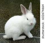 Stock photo white rabbit on an asphalt 632674664