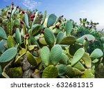 cactus field in mexico city | Shutterstock . vector #632681315