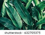 tropical leaf  nature green... | Shutterstock . vector #632705375