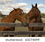 two beautiful bay horses behind ... | Shutterstock . vector #63274099