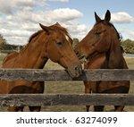 Two Beautiful Bay Horses Behin...