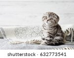 Stock photo cute scottish fold kitten sitting in soft blanket on wooden boards background 632773541