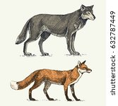 wild grey wolf and red fox...   Shutterstock .eps vector #632787449