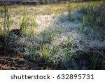 untamed  | Shutterstock . vector #632895731