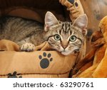 Stock photo cute tabby kitten looking out of his comfortable bed 63290761