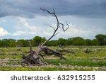 etosha national park in rain... | Shutterstock . vector #632915255
