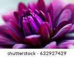 dahlia flower macro shot.... | Shutterstock . vector #632927429