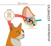 veterinary medicine. cat ear... | Shutterstock .eps vector #632948765