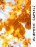 autumn landscape. bright...   Shutterstock . vector #63296632