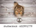 adult shetland sheepdog seen...   Shutterstock . vector #632991779