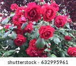 red roses | Shutterstock . vector #632995961