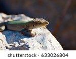 lizard eyes | Shutterstock . vector #633026804