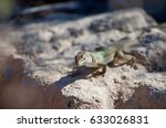 on the rock | Shutterstock . vector #633026831