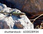 lizard rocks | Shutterstock . vector #633028934