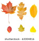 collection of different leaves ... | Shutterstock . vector #63304816