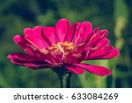 beautiful flower blossom in the ... | Shutterstock . vector #633084269