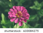 beautiful flower blossom in the ... | Shutterstock . vector #633084275