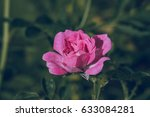 beautiful flower blossom in the ... | Shutterstock . vector #633084281