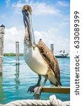 Pelican Big Sit On The Marina...