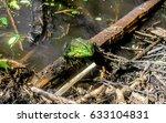 frog | Shutterstock . vector #633104831