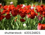 meadow with colorful flowers | Shutterstock . vector #633126821