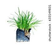 Small photo of Allium tuberosum isolated on white background