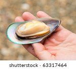 Hand holding freshly cooked New Zealand green-lipped mussel - stock photo