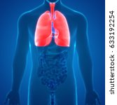 human body organs anatomy ...   Shutterstock . vector #633192254