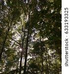 forest | Shutterstock . vector #633193325
