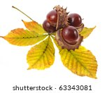 Leaf Of Horse Chestnuts Tree...