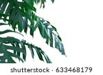 palm leaf isolated | Shutterstock . vector #633468179