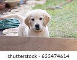 golden retriver puppy | Shutterstock . vector #633474614