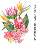 rhododendron  strelitzia ... | Shutterstock . vector #633478739
