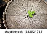 new growth from old concept.... | Shutterstock . vector #633524765