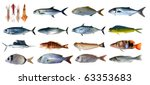 fish species saltwater index... | Shutterstock . vector #63353683