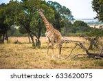 a giraffe walking on the... | Shutterstock . vector #633620075