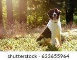 dog in the forrest | Shutterstock . vector #633655964