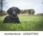 Stock photo black labrador puppy 633657401