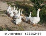 snow goose walk.  | Shutterstock . vector #633662459