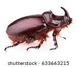 Rhinoceros Beetle Isolated On ...