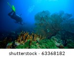 diver yellow fin and sea fan | Shutterstock . vector #63368182