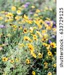 Small photo of Florida Wildflowers
