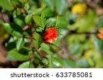 Tiny Orange And Yellow Rose Bu...