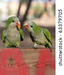 two green little parrots eating | Shutterstock . vector #63379705