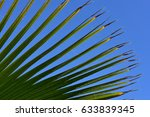 Green Spiky Leaf Of Palm Tree...