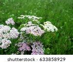 milfoil flowers in meadow macro ... | Shutterstock . vector #633858929
