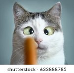 funny cat at ophthalmologist... | Shutterstock . vector #633888785