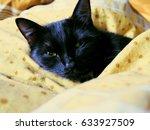 black cat sleeping in bed... | Shutterstock . vector #633927509