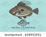 John Dory. Vector Illustration...