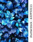 tropical blue leaf glow in the...   Shutterstock . vector #633953111